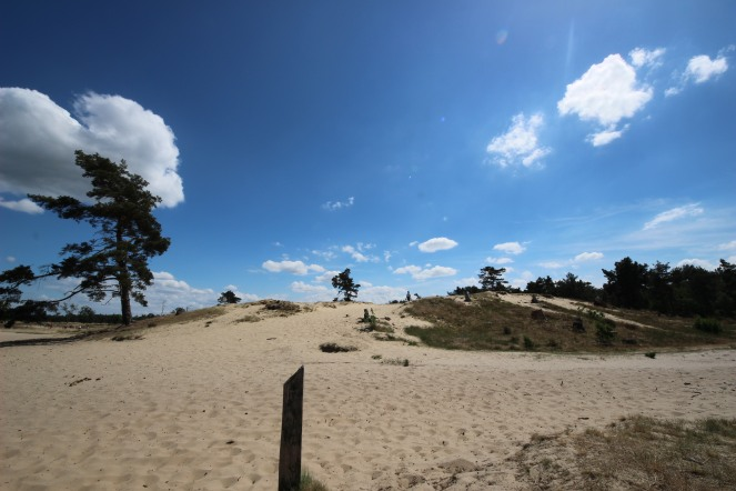 Loonse en Drunense Duinen National Park - dunes up to 24m high