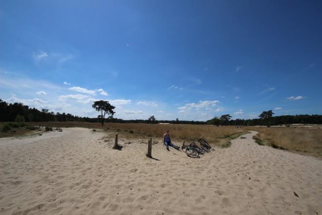 Loonse en Drunense Duinen National Park - sand, sand, sand