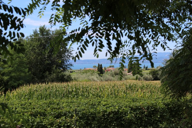 vineyards of Bardolino wine