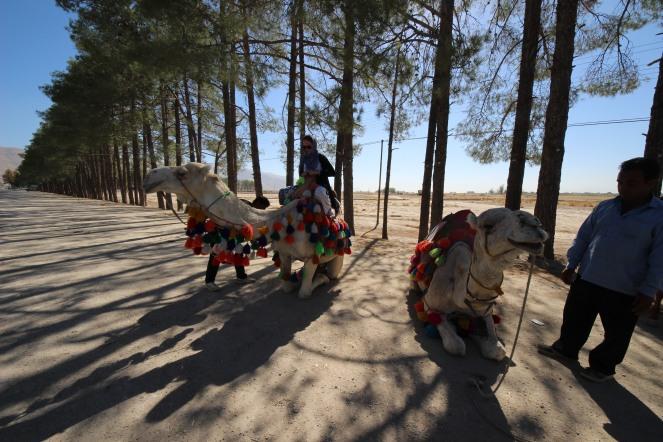 camel riding in Persepolis